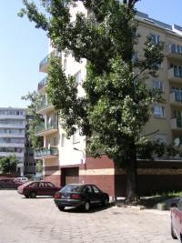 zdjęcie Pasteura 6A